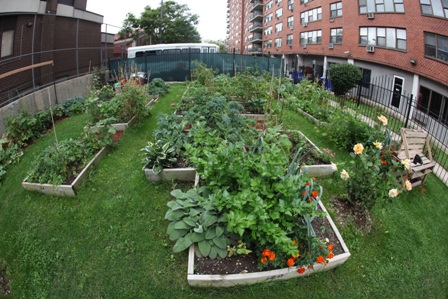 COMMUNITY GARDEN AT THE LENOX IN UNION CITY, NJ.